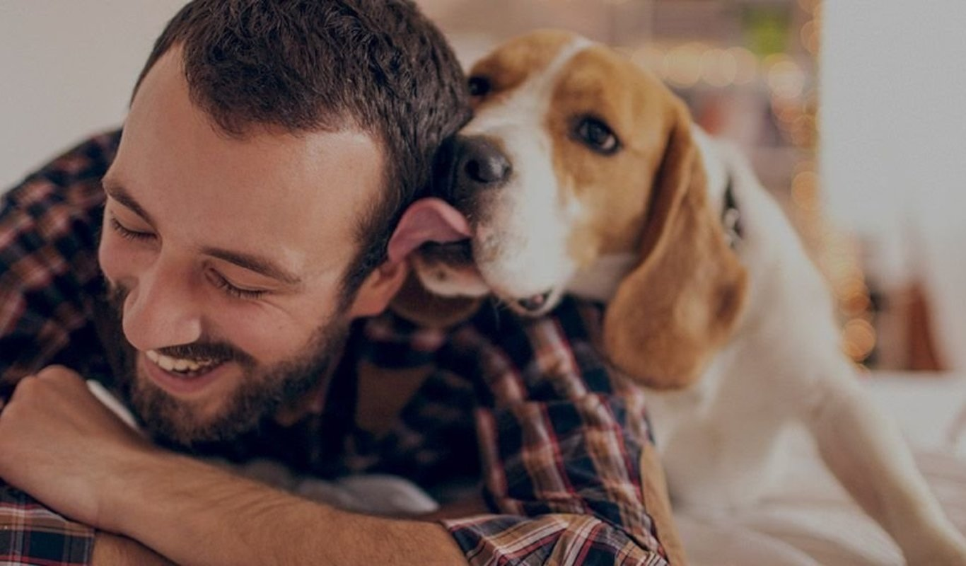 DogBuddy, encuentra al canguro ideal